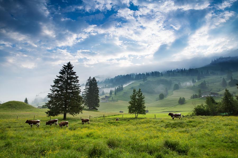 Einheitswert in Österreich
