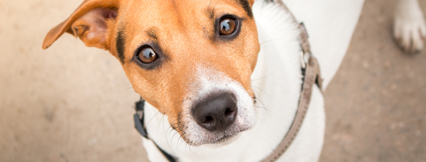 Hundeversicherung Österreich